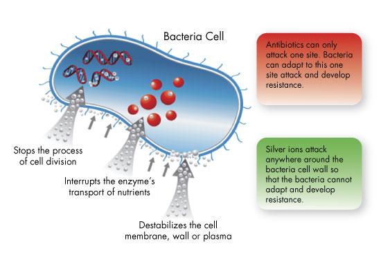 Cơ chế sát khuẩn của nano bạc